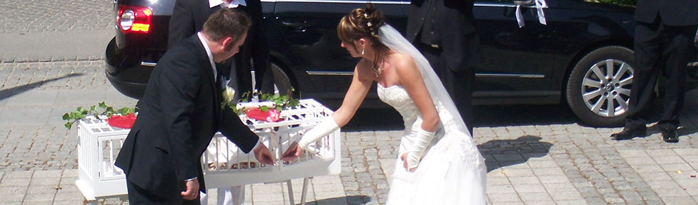 Hochzeitstauben-MV Hochzeit Taubenkorb